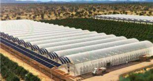 نایلون کشاورزی مازندران با قیمت استثنایی